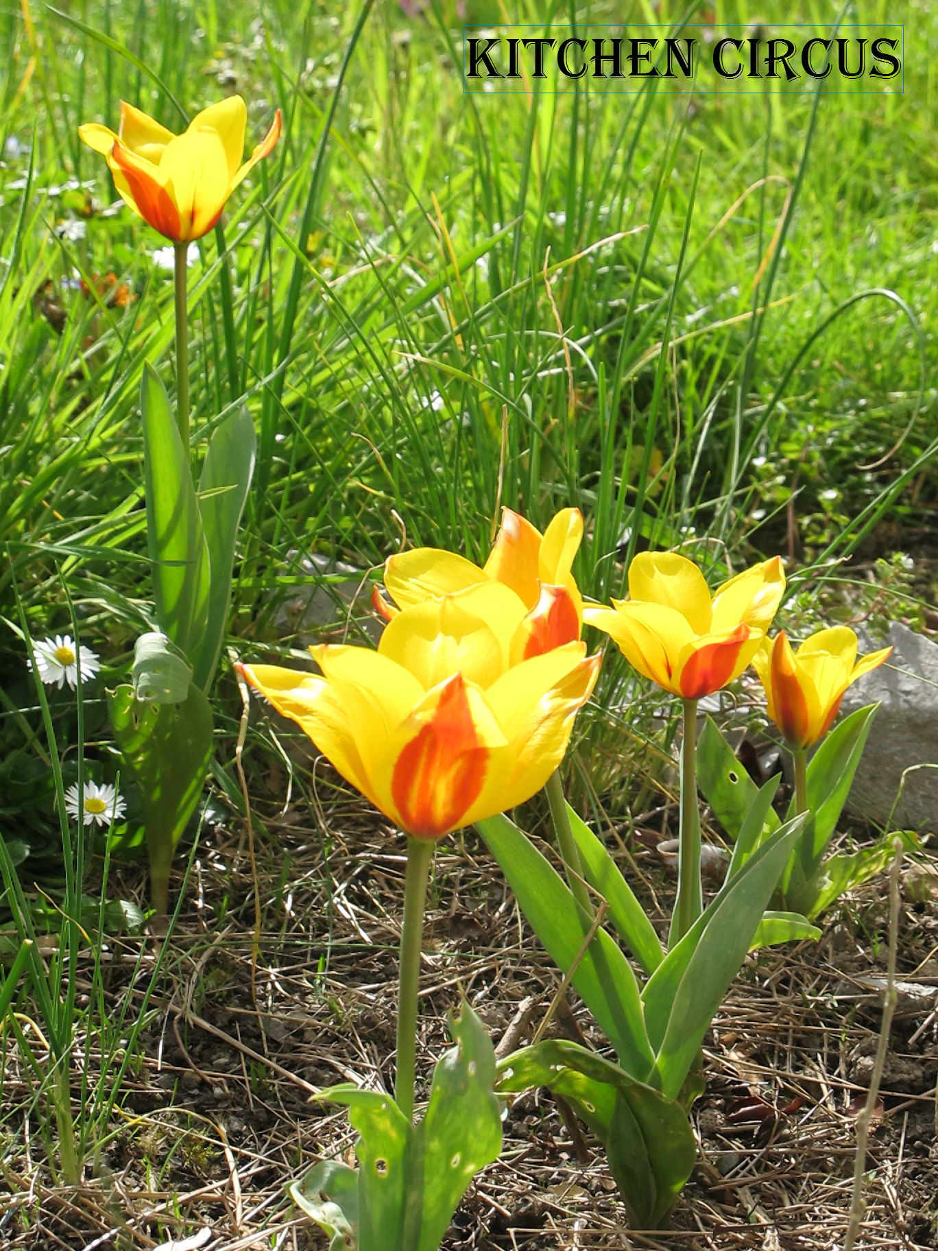 img_4266 dans Jardinage