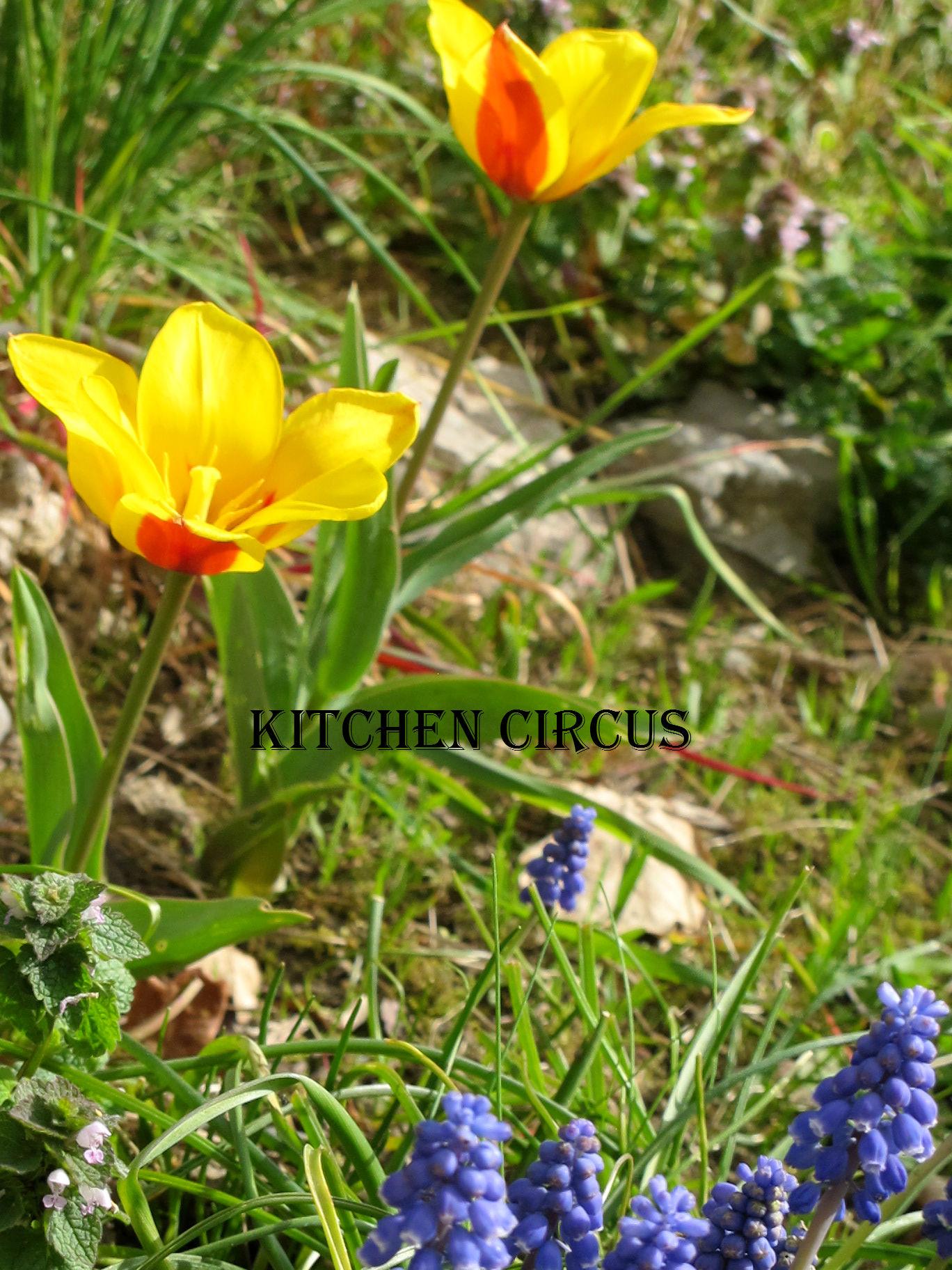 Jardinage: Début Mars, c'est le début des semis dans Jardinage img_4267